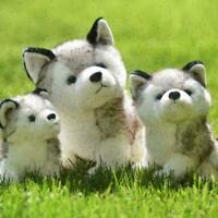 Plush Doll Soft Toy Stuffed Animal Cute Husky Dog Baby Pet Gi E2W2 New Kids O4O1