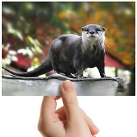 "Otter Wild Animal Nature - Small Photograph 6"" x 4"" Art Print Photo Gift #12642"