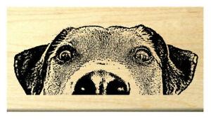 P119 Peeking Dog rubber stamp