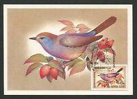 RUSSIA MK FAUNA VÖGEL BIRDS OISEAUX MAXIMUMKARTE CARTE MAXIMUM CARD MC CM d263