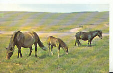 Animals Postcard - Ponies - New Forest - Hampshire - Ref 616A