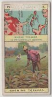 Tobacco Cultivation America Cuba Turkey 100+  Y/O Ad Trade Card