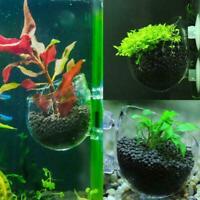 Microcosmic Shrimp Aquarium Tank aquatic Crystal Glass Pot Cup   Decor