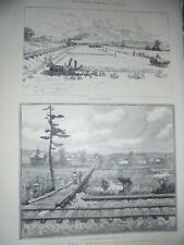 USA A Kansas Wheat Field and a roadside station on the plains 1885 prints ref AM