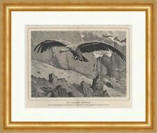 In a Blue Aether Vulture weisköpfig King of the Air Birds Hunting K 0178