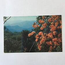 Flame Azaleas Mile High Overlook North Carolina Unposted Postcard