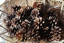 50 PINE CONES REAL RED  PINECONES NATURAL  GREAT CRAFTS WREATH!