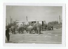 Wallace Bros. Circus - Vintage Snapshot Photo - Various Circus Animals
