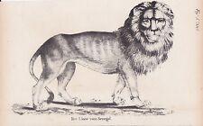 León Senegal-Löwe Panthera Leo Senegalensis Litografía De 1831 Brüggemann