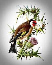 Europeo Cardellino di English Eliza Turck. Tela Uccello Art. 11x14 Stampa
