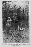 PHEASANT HUNTING SHOOTING IN THE WOODS WITH DOG HUNT SPORTSMAN BY A. B. FROST
