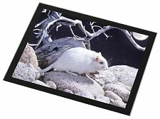 White Gerbil Black Rim Glass Placemat Animal Table Gift, GERB-1GP