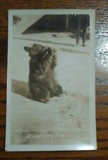 "RPPC - ""A Maine Pet"", bear cub drinking from bottle"