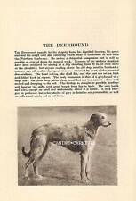 Deerhound Dog Rare Vintage Art Photo and Breed Description From 1931