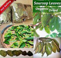 100 Soursop Leaves -100 Dried Soursop Leaves Guanabana/Graviola/Annona Muricata