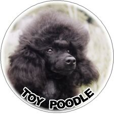 2 Toy Poodle Car Stickers By Starprint