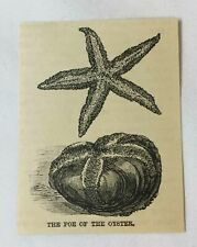 New listing small 1886 magazine engraving~ Starfish - The Foe Of The Oyster