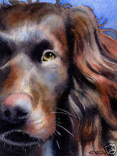 Boykin Spaniel Watercolor Dog 8 x 10 Art Print by Artist Djr