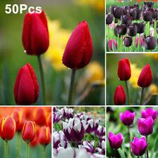 50Pcs Tulip Bulbs Flower Seeds Yard Garden Growing DIY Home Bonsai Plant Decor