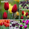 AB_ 50Pcs Tulip Bulbs Flower Seeds Yard Garden Growing DIY Home Bonsai Plant Dec