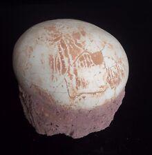 Segnosaur Dinosaur Egg Fossilized Crystallized Fossil Jurassic Cretaceous Wq1