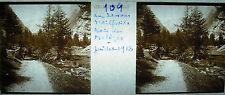 Fotografía por debajo de de Ailefroide madera de alerce juillet 1918 los Alpes