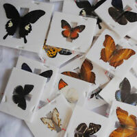 1Pc  Butterfly Specimen Folded Real Insects Wholesale Butterfly New Hono_ r6 #US