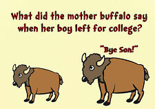 MAGNET DUMB JOKES What Did The Mother Buffalo Say to Son Leaving For College
