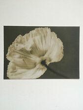 ROBERT MAPPLETHORPE, 'Flowers' promotional card, Shapero Modern gallery.