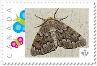 brown MOTH, BUTTERFLY Custom Postage stamp MNH Canada 2018 [p18-04sn10]