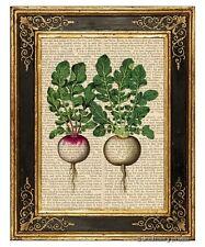Italian Radish Art Print on Vintage Book Page Home Kitchen Hanging Decor Gifts