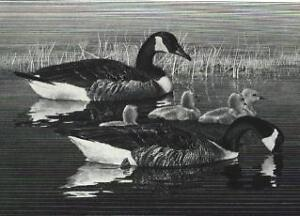 RW43 1976 FEDERAL DUCK STAMP PRINT + Artist Signed Stamp CA GEESE  List $785
