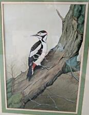 JEREMY PAUL (b.1954) Gouache Painting DOWNY WOODPECKER IN TREE 1981 BIRDS