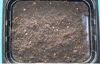 1 L Enchyträen Zuchterde, Spezialsubstrat zur Zucht von Enchytraeus albidus