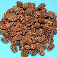 50g / 140 Stck. Erlenzapfen, Alnus glutinosa, Schwarzerle, Black Alder Cones