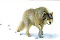 RARE Wolf in winter by Oleg Goncharov Russian modern postcard