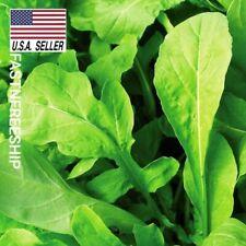 Arugula - 1,000 Seeds - Herbs  Vegetable seeds USA-SELLER!