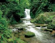 Fototapete ELLOWA FALLS 388x270 Wasserfall Wald Bäume Natur Wildnis grün Fluss