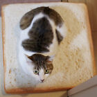 Toast Slice Bread Shape Plush Sponges Fillers Cat Dog Pet Mat Cushion Calm 40*40