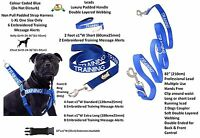 New BLIND DOG Safety Control Non Pull Harness Or Padded Handle Luxury Lead Sets