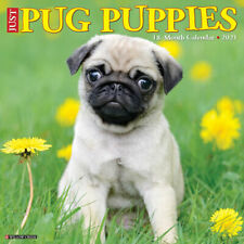 Just Pug Puppies (dog breed calendar) 2021 Wall Calendar (Free Shipping)