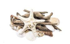 Beach wedding shell and driftwood sticks decorative pack A