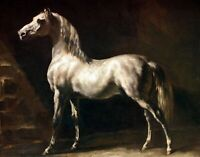 Gray-white Arab horse by Gericault. Pets Art Repro Made in U.S.A Giclee Prints