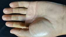 Real hand-held silicone prosthesis human anatomie squelette ODDITIES NOT bones