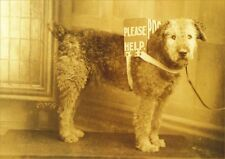 Airedale Terrier Dog Collecting Donations 1915 WWI  8 LARGE New Blank Note Cards