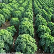 Semi-evergreen