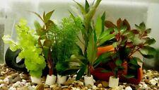 5 Bund Aquarienpflanzen Wasserpflanzen / enthalten mehr als 25 Stängel /