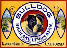 Highland English Bulldog Dog Lemon Citrus Fruit Crate Label Art Print