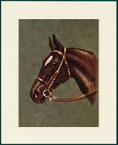 HORSE PRINT BEAUTIFUL HEAD STUDY MOUNTED PRINT READY TO FRAME