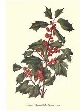 12 Vintage WALCOTT Botanical Wildflower Art Prints CHRISTMAS HOLLY & MISTLETOE